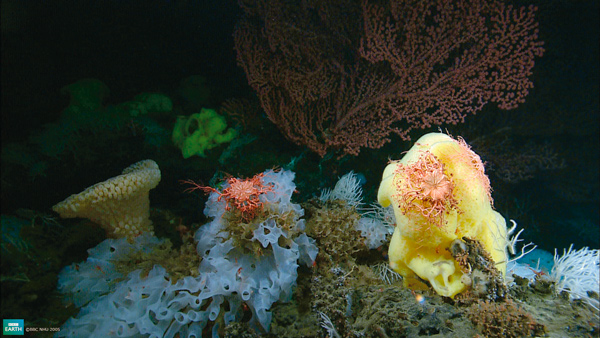 Corals and other marine invertebrates make up 95 percent of life in the oceans and are responsible for a tenth of the planet's land.