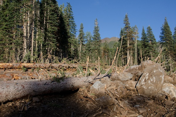 Bulldozing has already begun to make way for the Snowbowl expansion.: Photo by James Q. Martin.