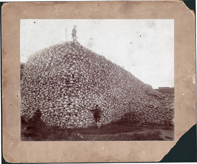Bison skulls waiting to be ground for fertilizer, circa 1870.: Burton Historical Collection/Detroit Public Library