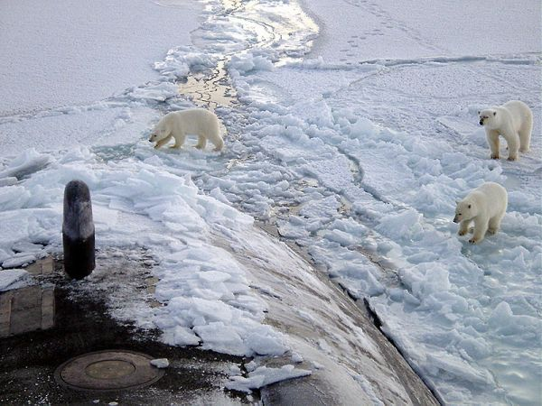 Polar bears investigate the USS Honolulu 28 miles from the North Pole. Credit: Chief Yeoman Alphonso Braggs, US-Navy.