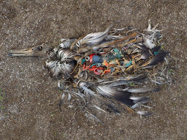 The garbage patch bird