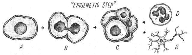 FIGURE 1: Epigenetic Step: A single cell. Illustrations by Joe Kloc