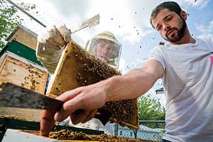 "Biologist Sam Hapke teaches inmate Daniel Travatte how to tend bees.  ""This is positive activity and something I'll take with me when I leave,"" Travatte says."