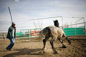 "Inmate Kelly Smith works with a horse that has recently accepted a halter.  Horses are no longer ""broken"" but trained via careful desensitization."
