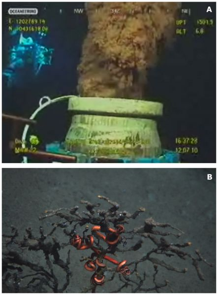 Deepwater Horizon oil slick in the Gulf of Mexico, 2010. (Top) photo of the oil being discharged in the water column; (Bottom) a coral in the deep Gulf of Mexico, with attached ophiuroid, covered with oil. Credit: Lophelia II 2010, NOAA OER and BOEMRE.