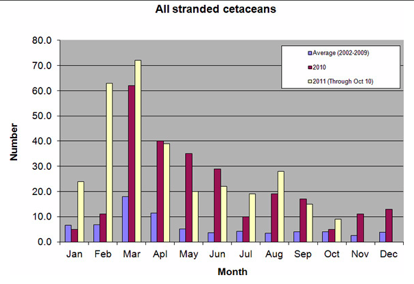 All stranded cetaceans (dolphins and whales) from Franklin County, FL to the Texas/ Louisiana border.: Credit: NOAA.