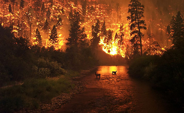 Deer and wildfire, Montana.: John McColgan, USFS, via Wikimedia Commons.