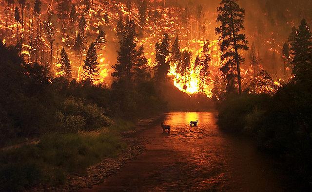 Deer and wildfire, Montana.: John McColgan, USFS, via Wikimedia Commons.