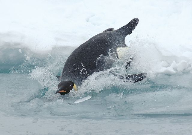 Credit: Antarctic Photo Library of the US Antarctic Program, courtesy Wikipedia Commons.