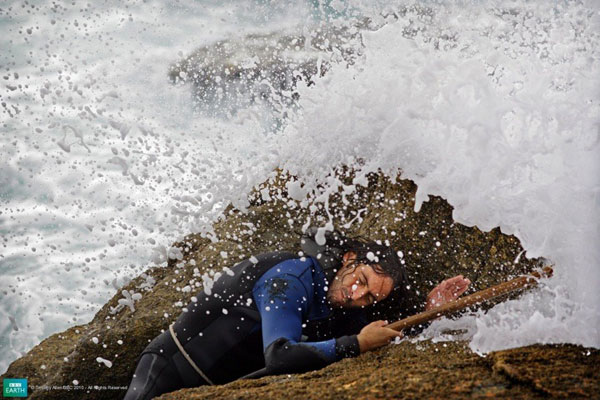 Collectors battle huge waves on the Galician cliffs, Northern Spain.
