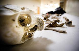 Bones of a presumed crosser discovered near Tucson by a woman on horseback.