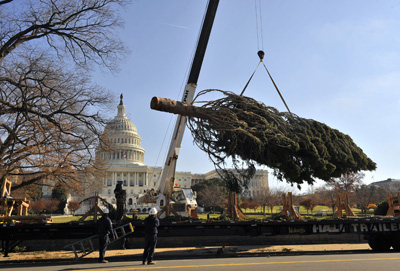Setting up the Capitio Christmas Tree.: Xinhua/Zumapress.com