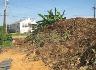 Grassroots: Students at the Bair School grow okra, melons, and bananas (Photo: Tim Murphy).