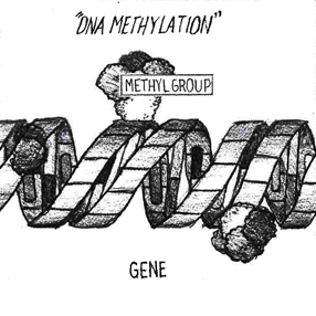 FIGURE 2: DNA Methylation: Methyl groups attach themselves to base pairs of a gene, changing the way it is expressed.