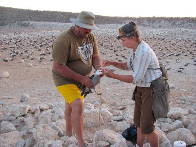 Correo and Velarde with a captured gull.: Julia Whitty