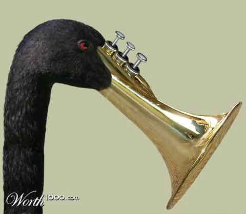 Trumpeter Swan: By dollyllama