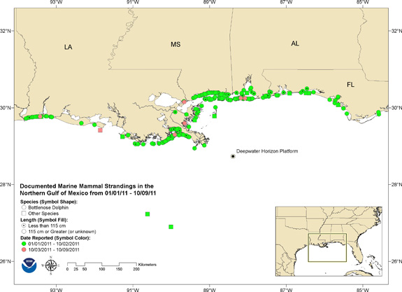 Map of strandings in relation to Deepwater Horizon well.: Predicted heat index for Friday, 22 July, 2011. Credit: NOAA.