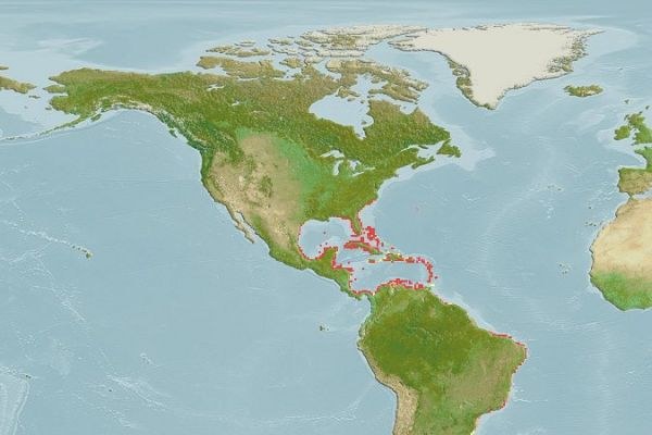 Range map of the dwarf seahorse, Hippocampus zosterae. From FishBase.org.