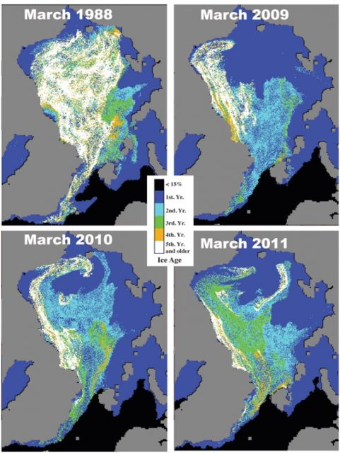 Sea ice age in the first week of March derived from tracking the drift of ice floes in 1988, 2009, 2010 and 2011. : Figure courtesy of J. Maslanik and C. Fowler, via NOAA.