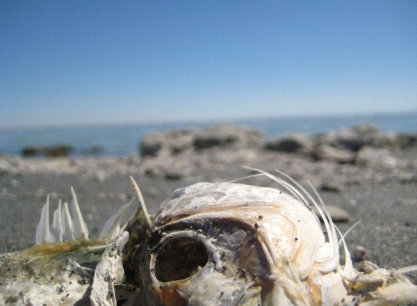 Another Palm Springs: The Salton Sea is not for everyone (Photo: Tim Murphy).